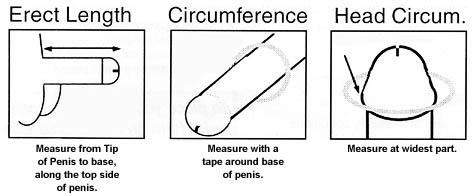 Penis Size Indicator